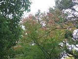 2006_1123edohaku0213