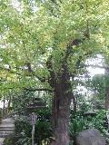 2006_1123edohaku0217