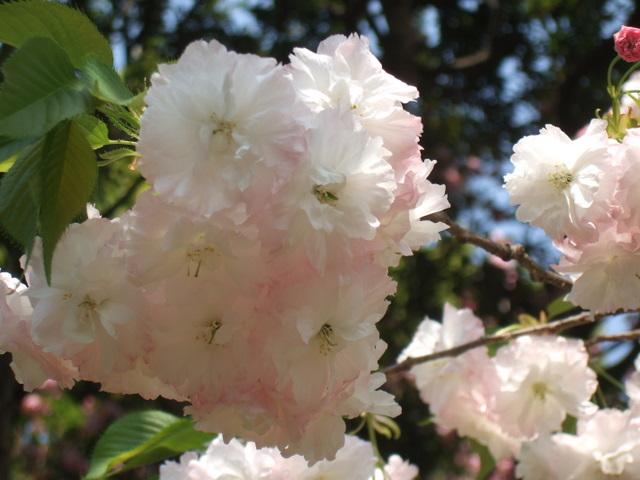 2009_04130047
