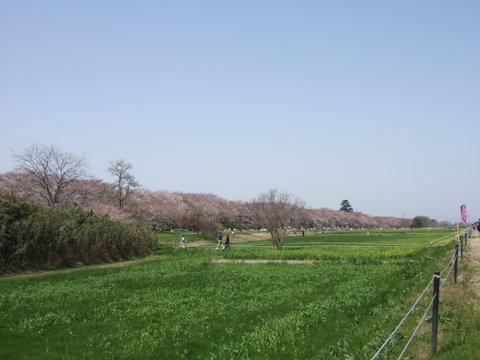 2006_0401ohanami0044