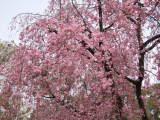 2006_0408yosino0148_2